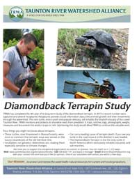 Diamondback Terrapin Study